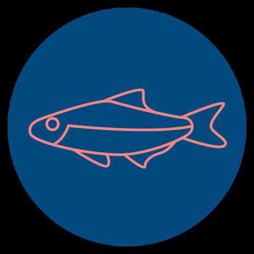 Färsk Fisk hel